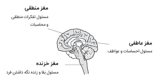 مغز خزنده یا Reptilian Brain